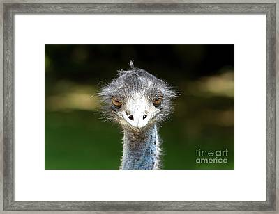 Head Of Ostrich Framed Print by Patricia Hofmeester
