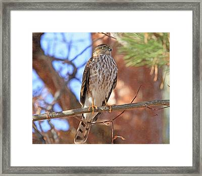 Heart To Heart Framed Print by Donna Kennedy