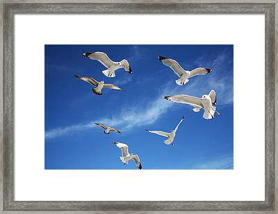 Heavenly Seagulls Framed Print