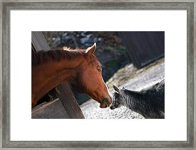 Hello Friend Framed Print by Angela Rath