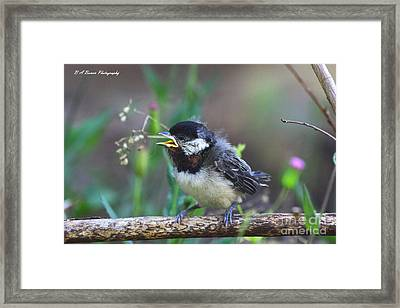 Hello World Framed Print by Barbara Bowen