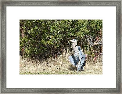 Henry The Heron Framed Print by Benanne Stiens