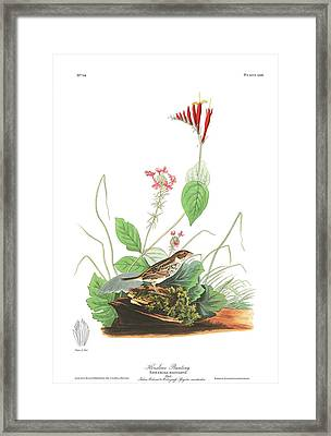 Henslows Bunting Framed Print
