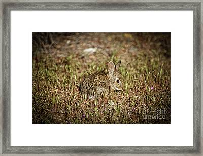 Here I Am Framed Print