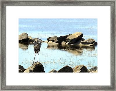 Heron On The Rocks Framed Print