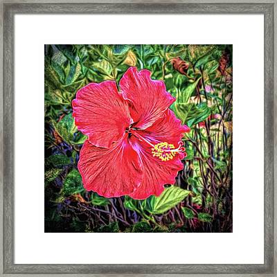 Framed Print featuring the photograph Hibiscus Flower by Lewis Mann