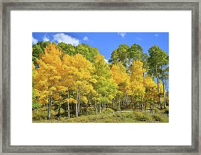 Framed Print featuring the photograph High Country Aspens by Ray Mathis