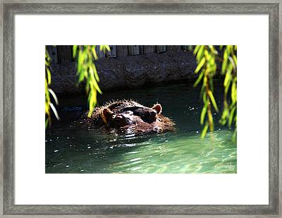 Hippo Framed Print by Thea Wolff