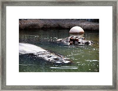 Hippos Framed Print by Thea Wolff