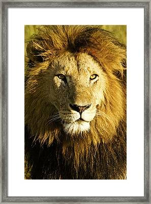 His Royal Highness Framed Print by Michele Burgess