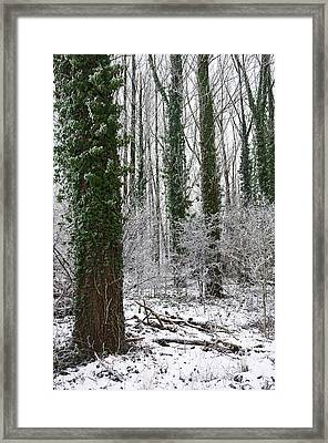 Hoarfrost In Forest  Framed Print by Claudia Holzfoerster