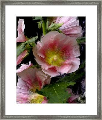 Hollyhock Heaven Framed Print