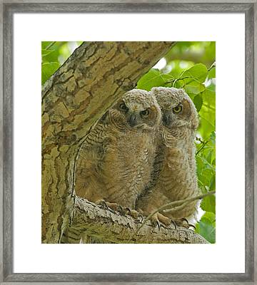 Home In The Cottonwoods Framed Print