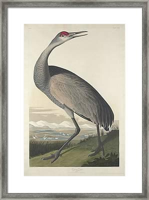 Hooping Crane Framed Print