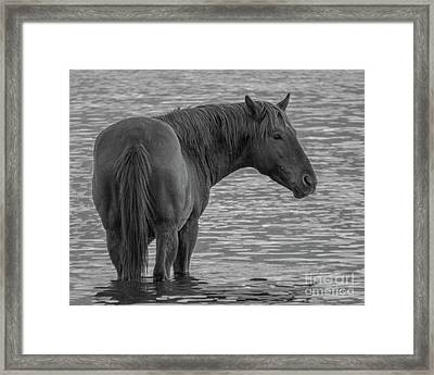 Horse 10 Framed Print