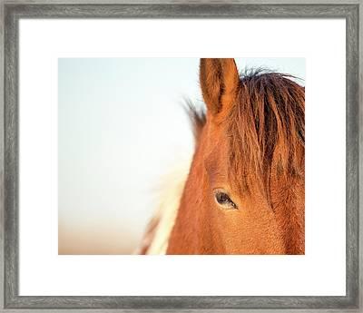 Horse Eye Fine Art Print Framed Print