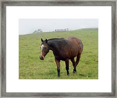 Horse In The Fog Framed Print