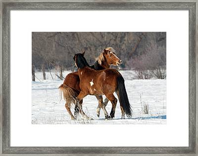 Framed Print featuring the photograph Horseplay by Mike Dawson