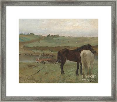 Horses In A Meadow Framed Print