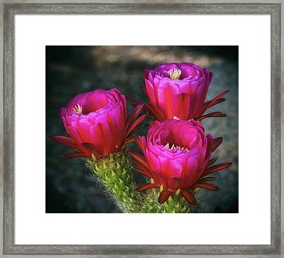 Hot Pink  Framed Print by Saija Lehtonen
