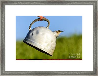 House Wren In Tea Kettle Home Framed Print