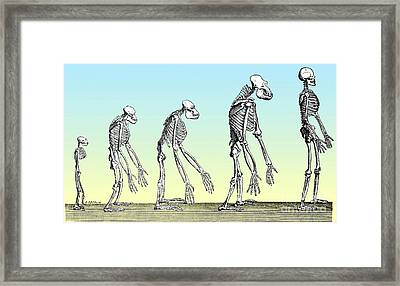 Human Evolution  Framed Print