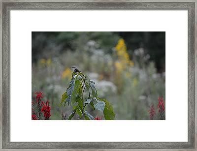 Humming Bird Framed Print by Linda Geiger
