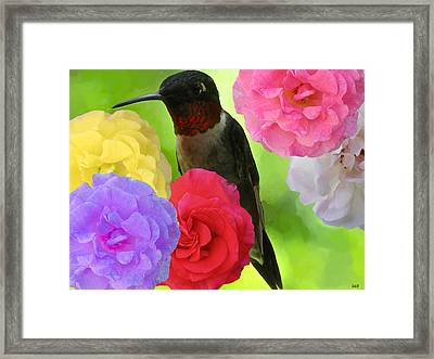 Hummingbird Flower Framed Print by Debra     Vatalaro