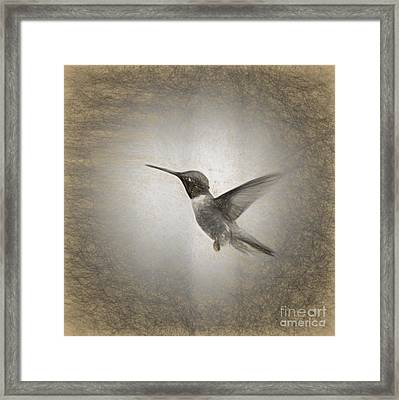 Hummingbird In Charcoal Framed Print by Janice Rae Pariza