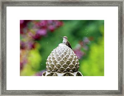 Hummingbird On Garden Water Fountain Framed Print by David Gn