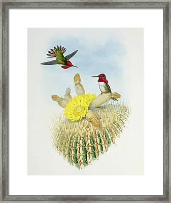 Hummingbirds Framed Print