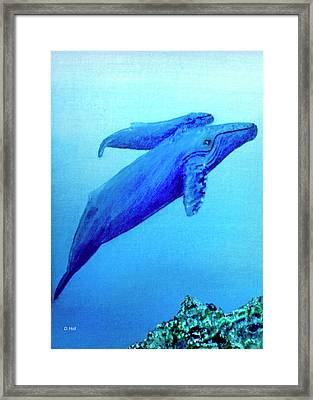 Humpback Mother Whale And Calf #21 Framed Print by Donald k Hall