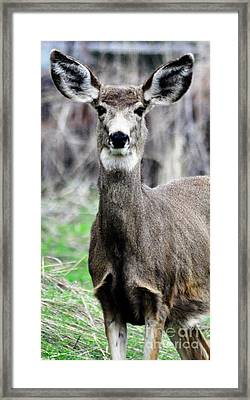Framed Print featuring the photograph I Hear You by Juls Adams