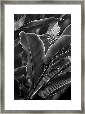 I See You Framed Print by Jon Glaser