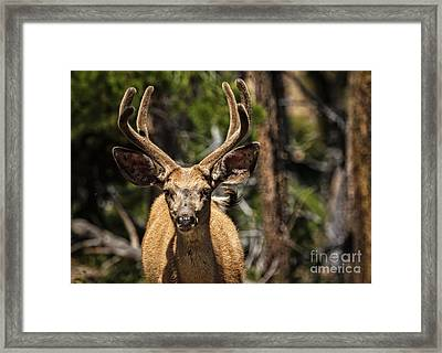 I See You Framed Print by Robert Bales