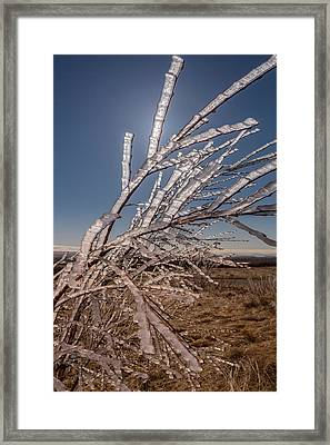 Ice Crystals On Tree Branches, Iceland Framed Print