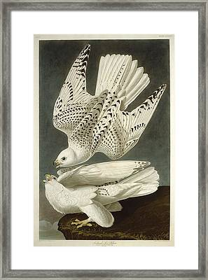 Iceland Or Jer Falcon Framed Print by Anton Oreshkin
