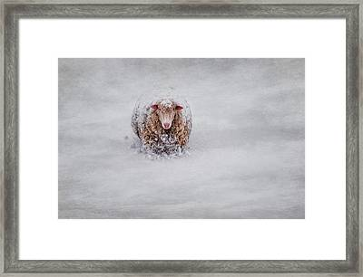 Icing On The Cape Framed Print