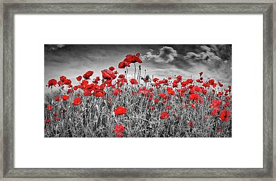Idyllic Field Of Poppies Panoramic Colorkey Framed Print