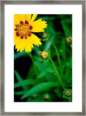 Illumination Framed Print by Frozen in Time Fine Art Photography
