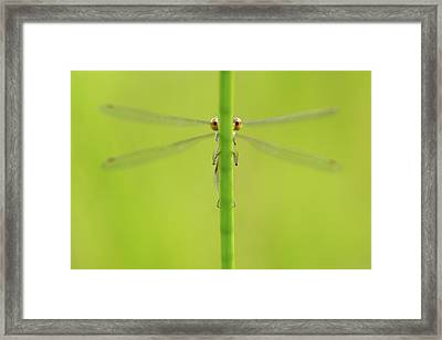 I'm Hiding - The Sequel Framed Print