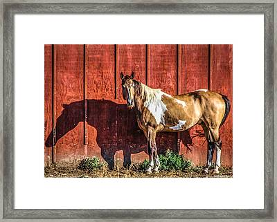 #0783 - Buckskin On Red Framed Print