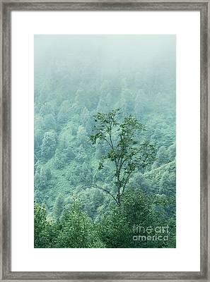 In A Fog Framed Print by Svetlana Sewell