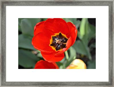 In Full Bloom Framed Print by Deepa Sahoo
