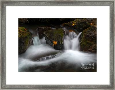In The Center Of It All Framed Print