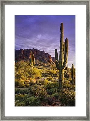 In The Desert Golden Hour  Framed Print