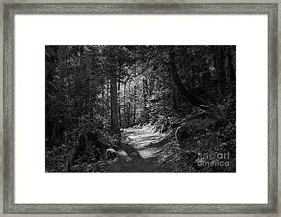 In The Forest Framed Print by Cendrine Marrouat