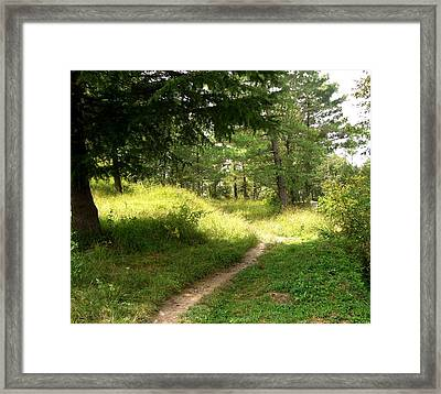 In The Forest Framed Print by Sunaina Serna Ahluwalia