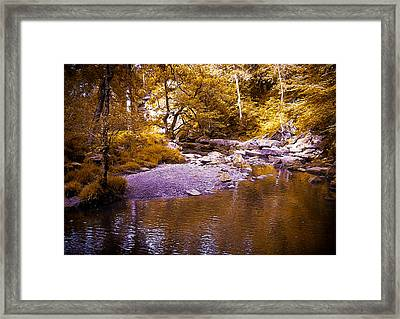 In The Forest Framed Print by Svetlana Sewell
