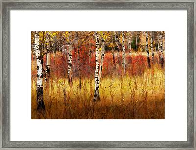 In The Grove Framed Print